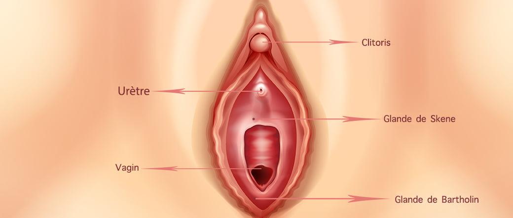 Maux de ttes pendant les rapports sexuels - Mdecine