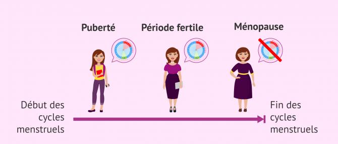 Imagen: La fertilité de la femme en fonction de l'étape reproductive