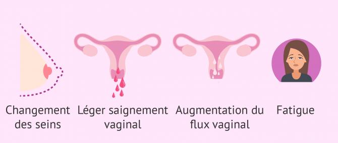 Premiers symptômes de grossesse