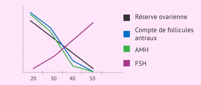 Relation entre FSH, AMH, compte folliculaire et réserve ovarienne
