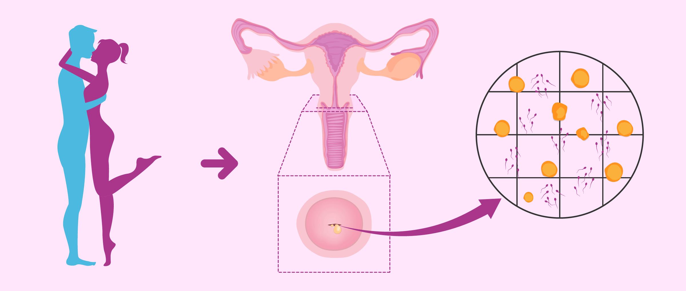 Mucus cervical pendant la grossesse
