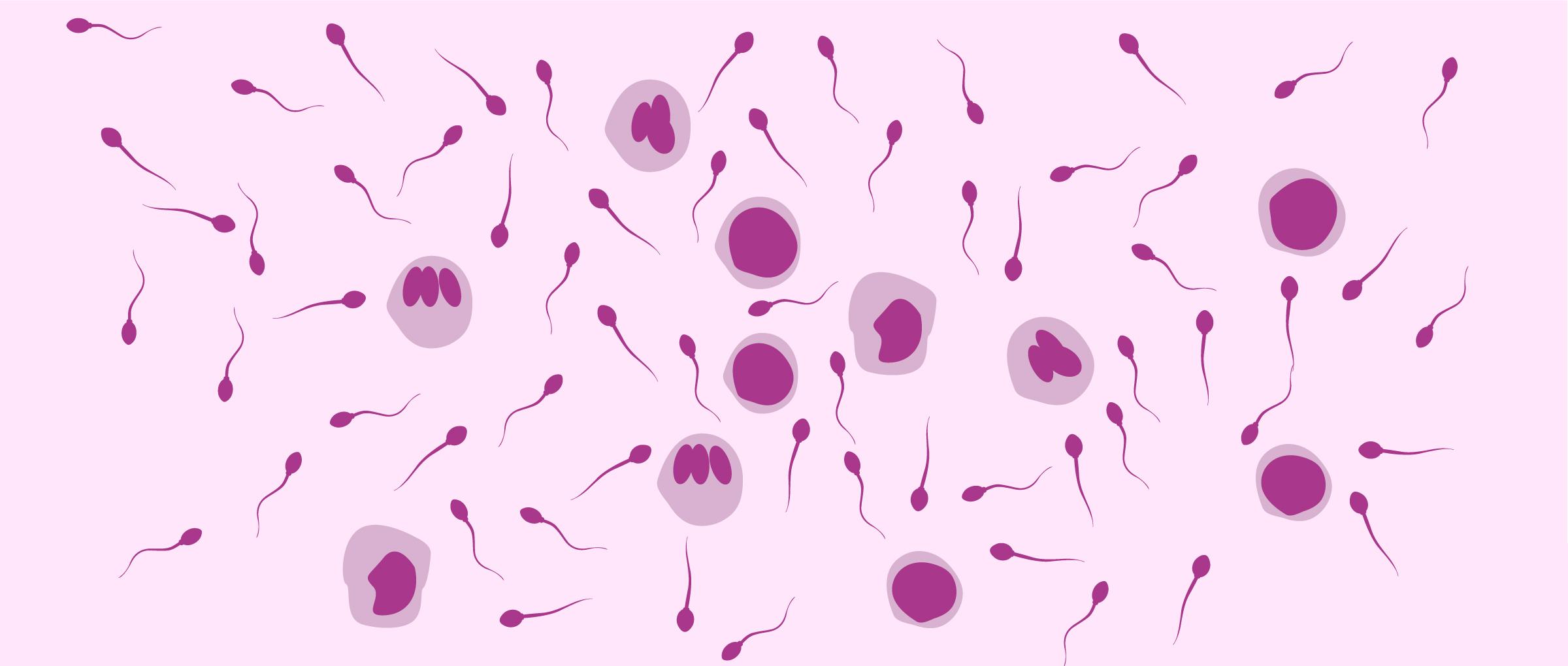 Leucocytes présents dans le sperme
