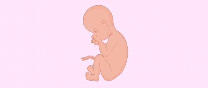 Septième mois de grossesse