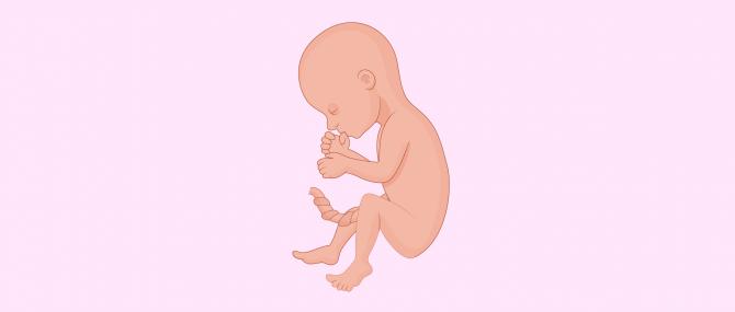 Sixième mois de grossesse