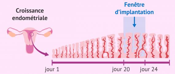Fenêtre d'implantation: la réceptivité de l'endomètre