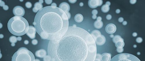 Stimulation ovarienne et qualité embryonnaire