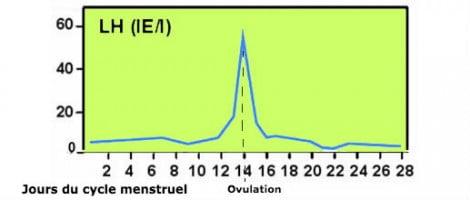 Propriétés de la gonadotrophine LH
