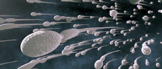 Fertilité masculine