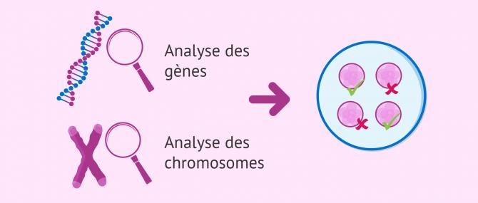 Imagen: Information génétique (ADN): chromosomes et gènes