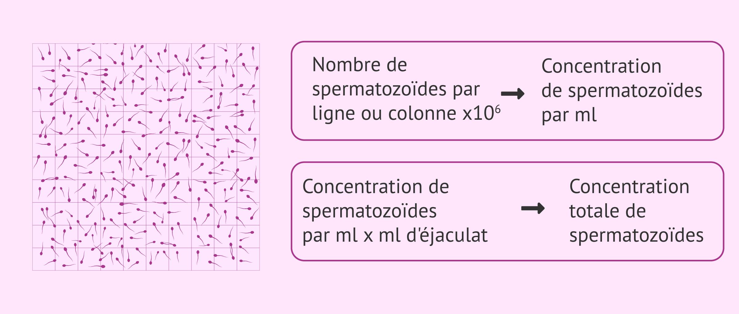 Imagen: Chambre de comptage pour l'évaluation de la concentration des spermatozoïdes
