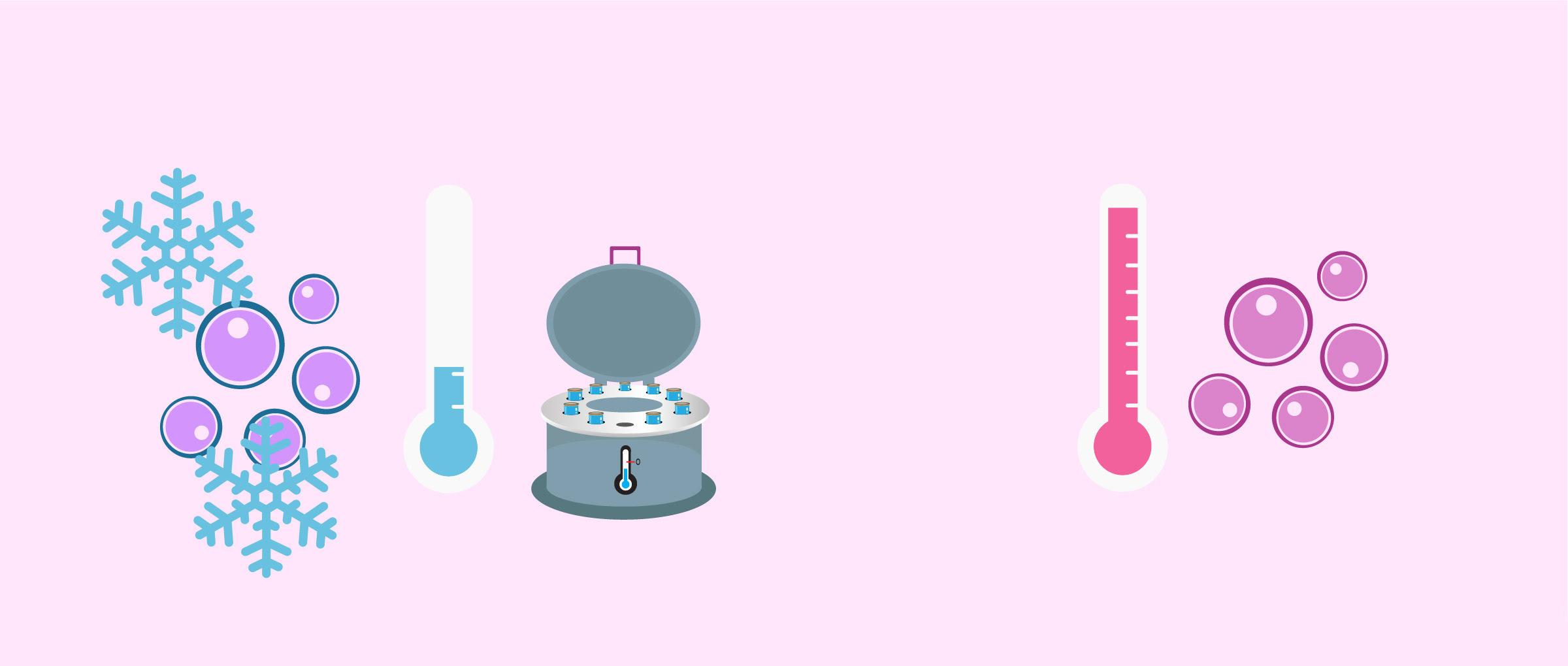 Don d'ovocytes avec ovules frais ou vitrifiés