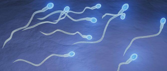 Don de sperme pour FIV