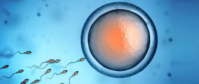 Formation des embryons