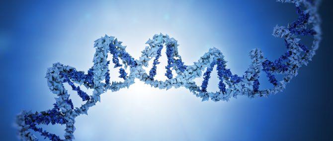 Analyse génétique de l'embryon