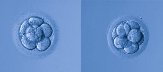 Don ou accueil d'embryons restants