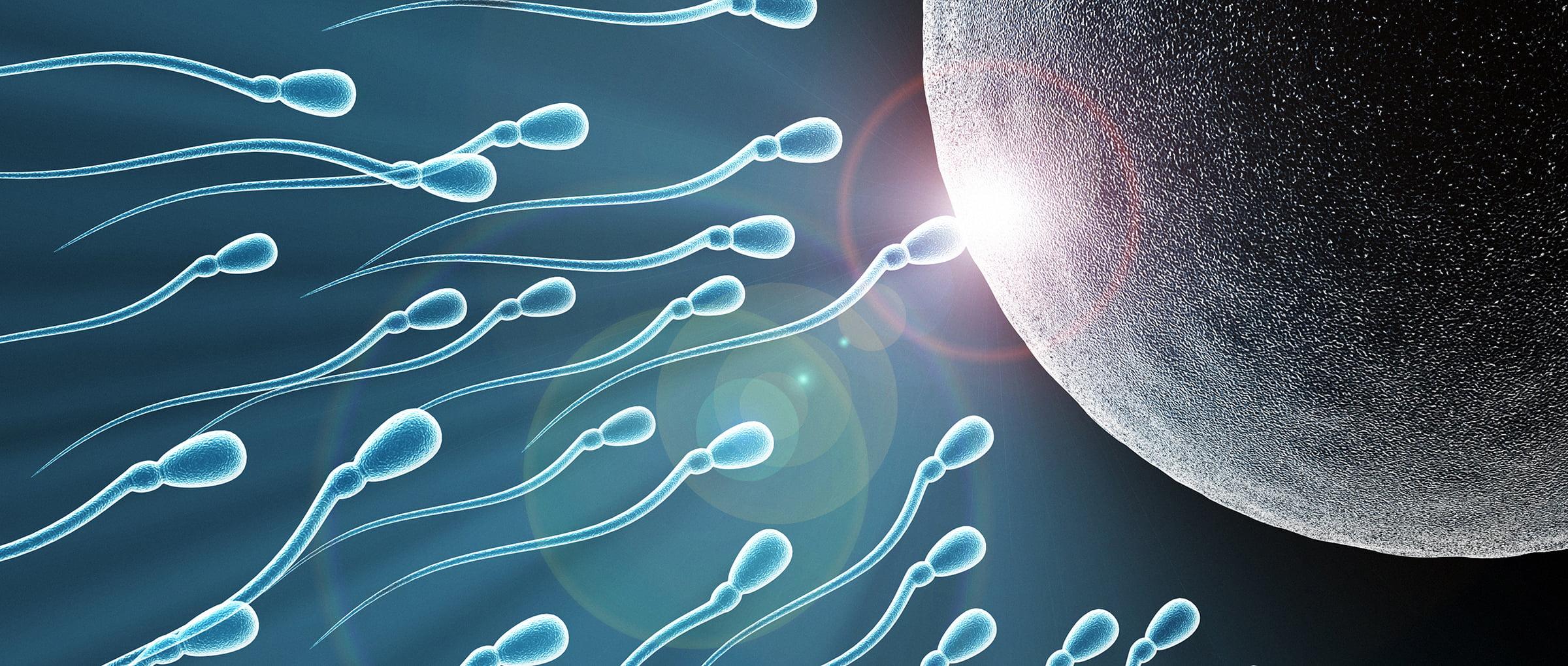 FIV avec don de sperme en Grèce