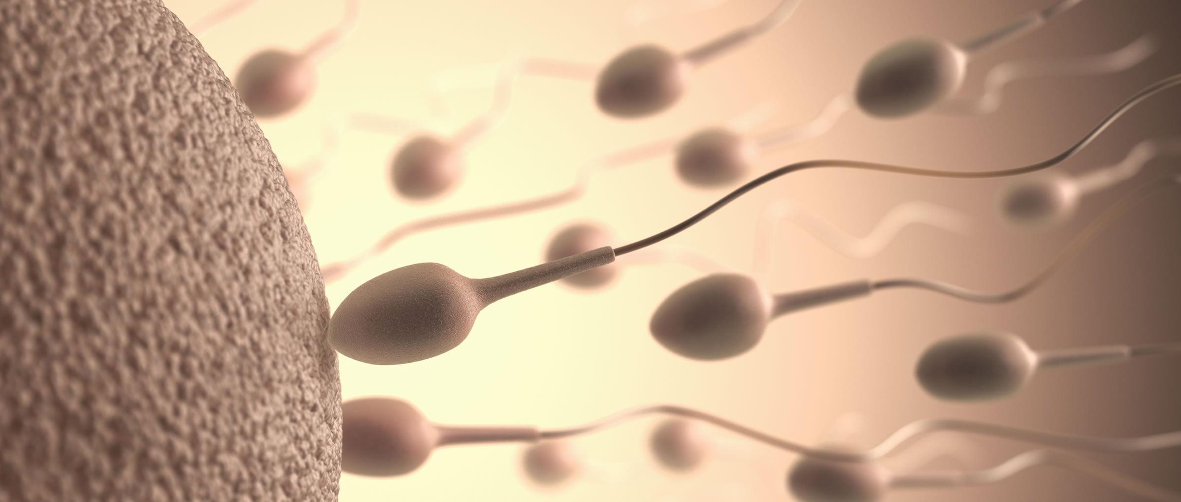 Don de sperme aux États-Unis