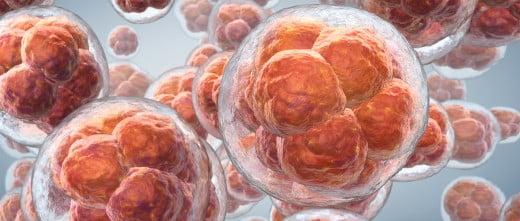 Embryons surnuméraires