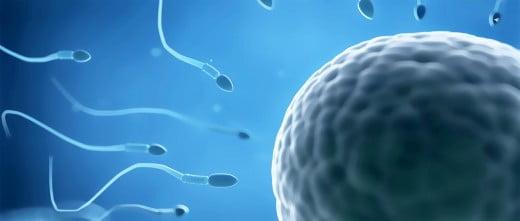 Ovocytes et sperme de donneurs