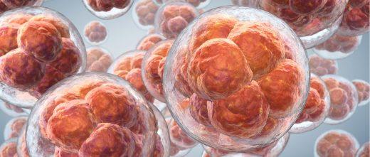Nombre d'embryons à transférer