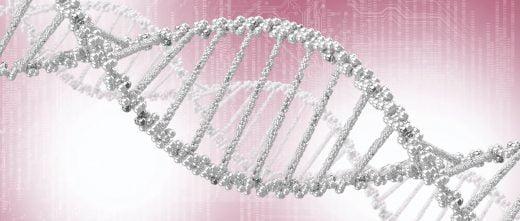 Apporter la charge génétique
