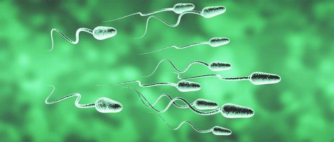 Utilisation de sperme de donneur en Ukraine