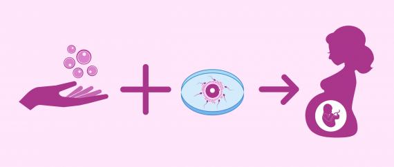 Grossesse par FIV avec ovules de donneuse