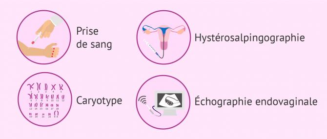 Bilan de fertilité féminine