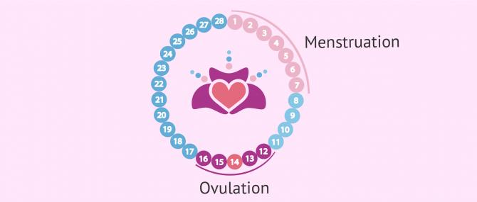 Début du premier mois de grossesse