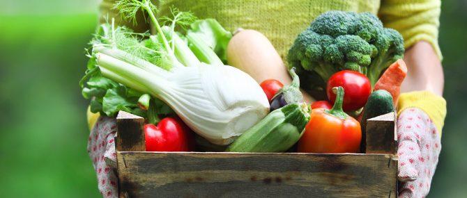 Alimentation pour augmenter l'épaisseur endométriale