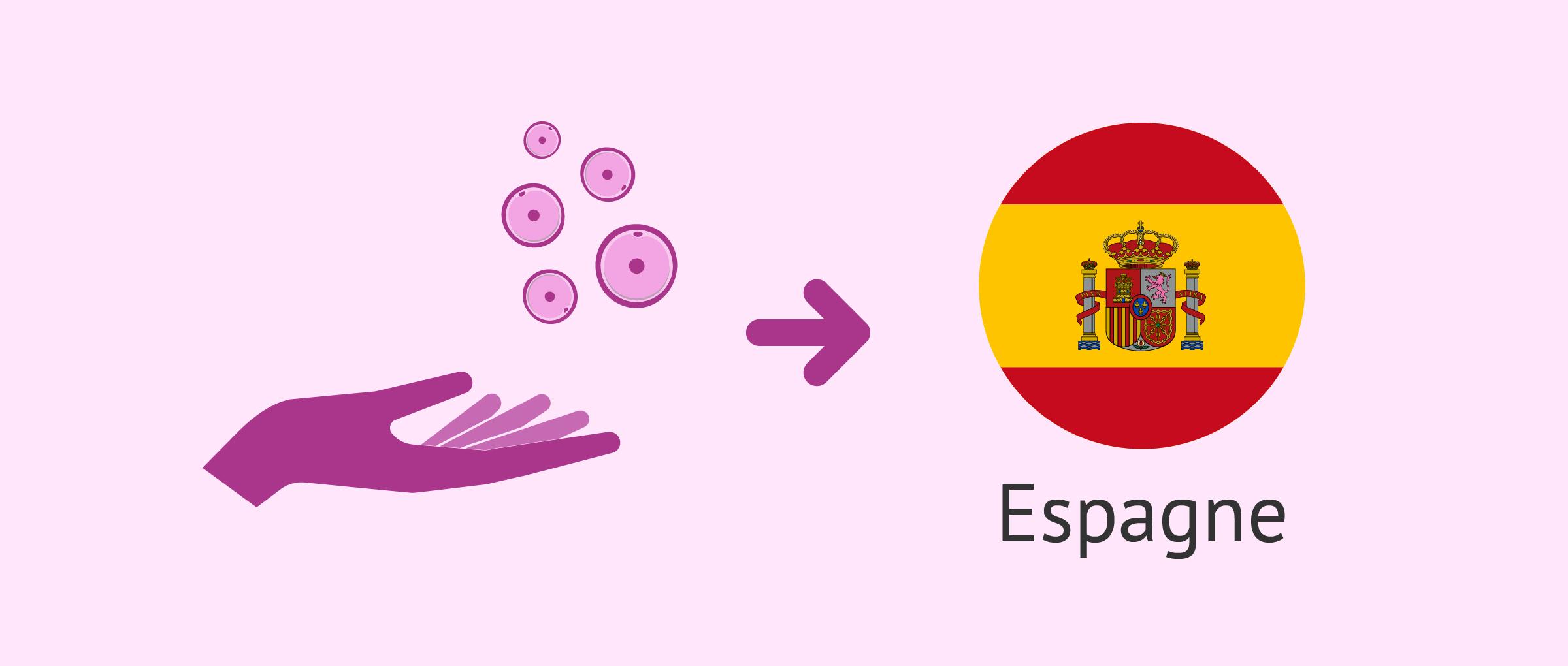Don d'ovocytes en Espagne - Législation, prix et fonctionnement