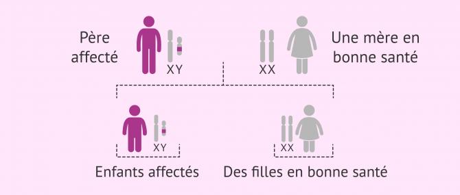 Imagen: Hérédité des maladies liées à l'axe Y