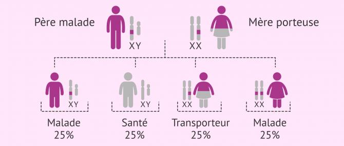 Imagen: Hérédité des maladies récessives liées au chromosome X