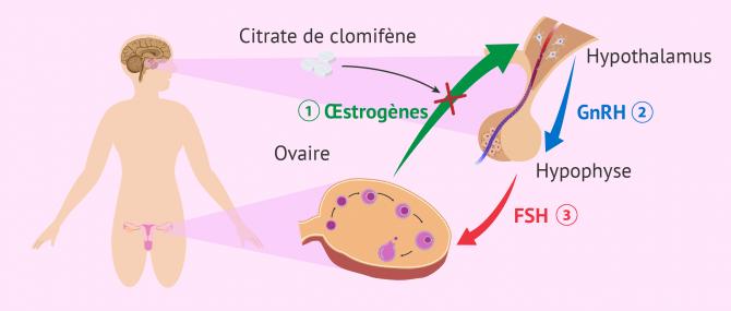 Imagen: Traitement citrate clomifene