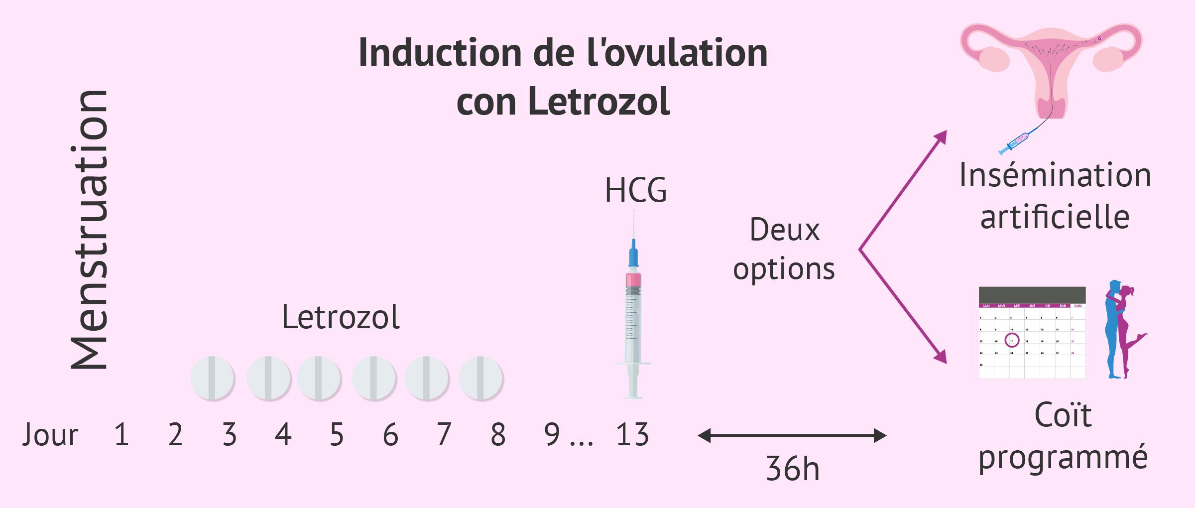 Mode d'administration pour obtenir l'ovulation avec un SOPK