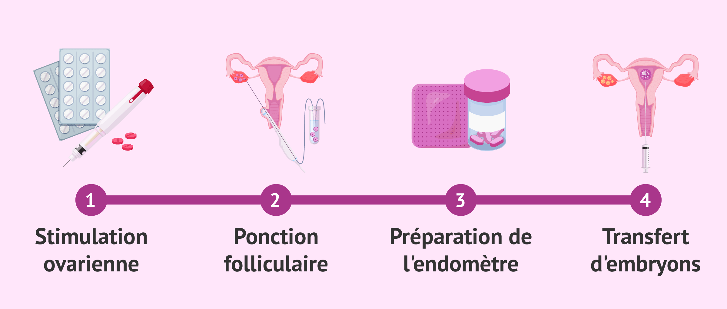 Les étapes de la FIV jusqu'au transfert de l'embryon