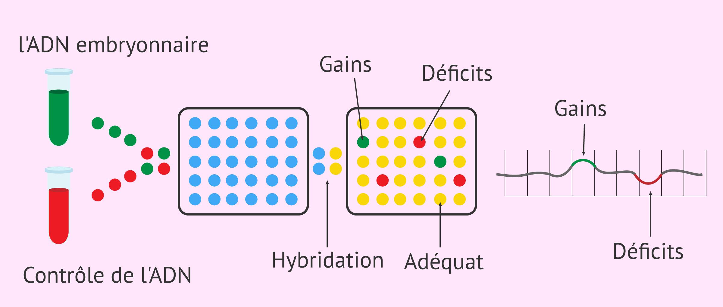 Analyse génétique par arrays CGH