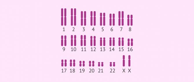 caryotype humaine