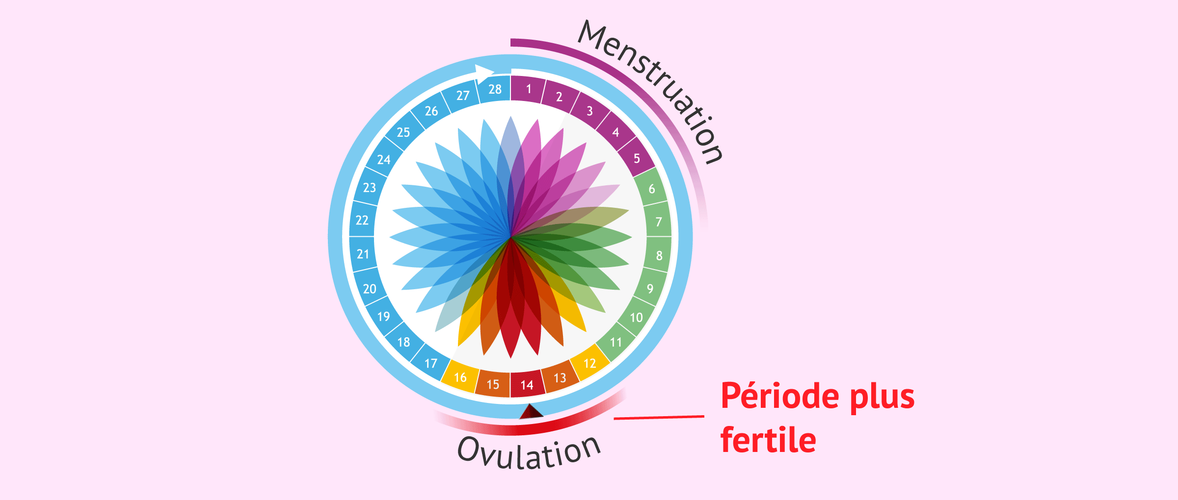 Calendrier de l'ovulation