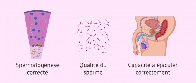 Imagen: Facteurs affectant la fertilité masculine