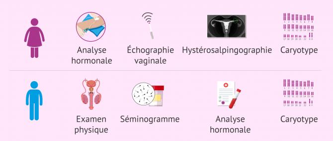 Imagen: Étude sur la fertilité