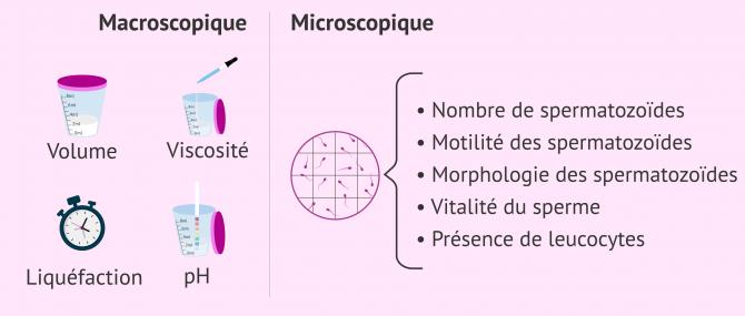 Imagen: Séménogramme de base avec paramètres macroscopiques et microscopiques