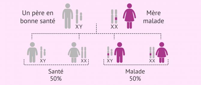 Imagen: Hérédité des maladies dominantes liées à l'X